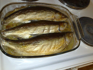 fish-20210105012538-1-20210227023224